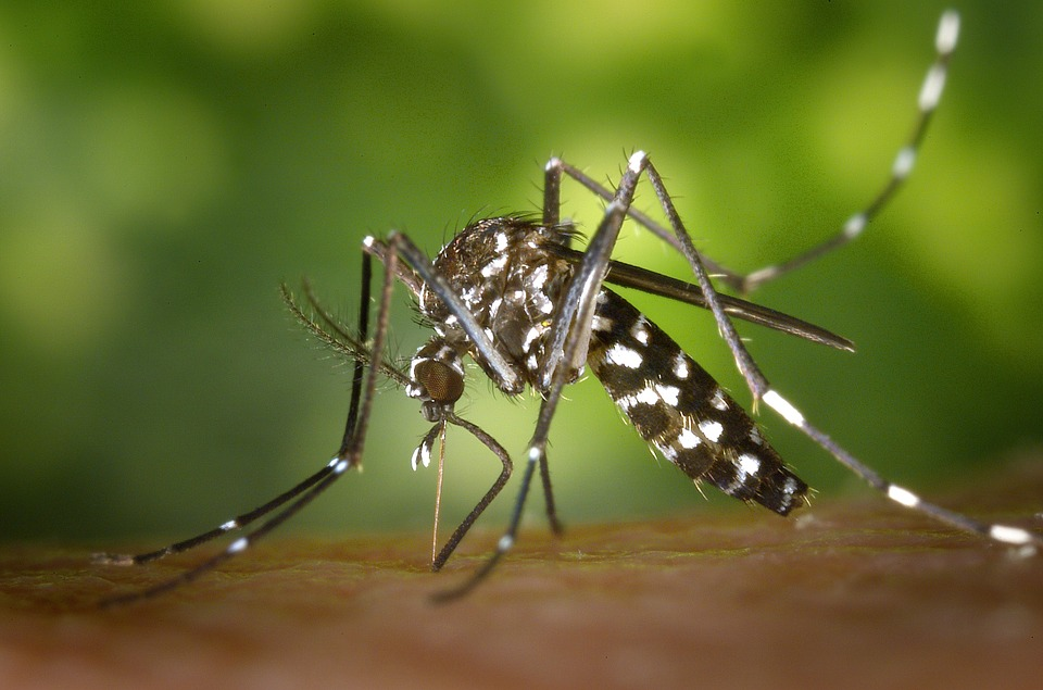 How Terminix, A Top Pest Control Company, Treats Mosquitos